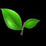 rośliny zbierają kurz